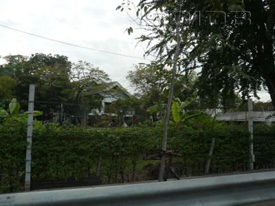 A photo of Factory Garden