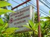 ラオス赤十字 - Luang Prabang Branch Blood Donation Centerのサムネイル: (2). ビル