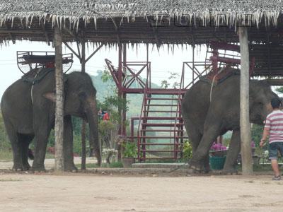 ภาพของ ลานช้างเขาชีจรรย์