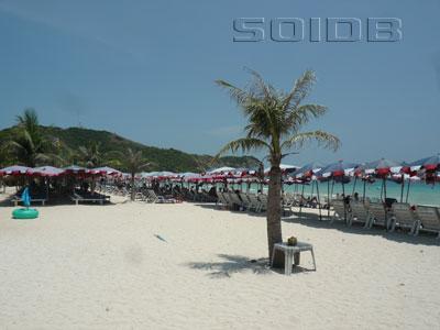 ภาพของ หาดแสม - เกาะล้าน