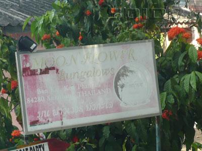 ムーン・フラワー・バンガローの写真