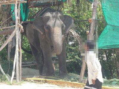 A photo of Maneerat Elephant Tours