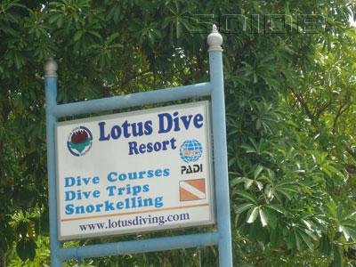 ロータス・ダイビングの写真