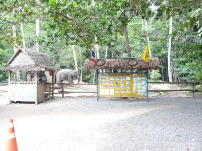 ナムアン・ジャングル・トリップの写真